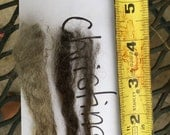 Pure BFL raw fleece, natural color, skirted Blue Faced Leicester