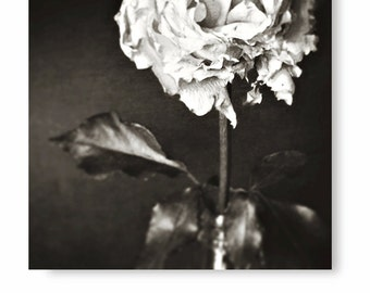 Black and White Photography, black and white flower photo, rose photo, rose print, floral decor, black and white flower art, home decor,