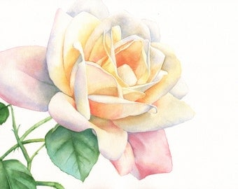 Rose print of watercolour painting A3 size largest print R4415