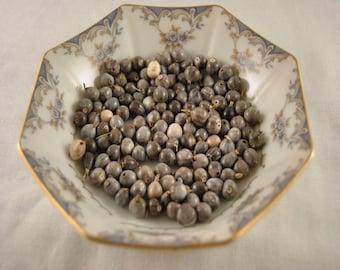 Job's Tears seed (coix lacryma-jobi seeds)