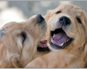 Pack of 4 Dog Puppy Golden Retriever Buddies dogs puppies Greeting Notecards/ Envelopes Set
