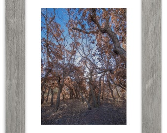 Colorado Forest Matted Print