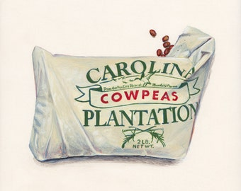 Cowpeas. Original egg tempera illustration from 'The Taste of America' book.
