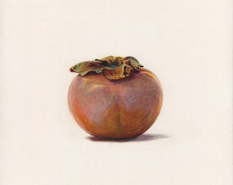 Persimmon. Original egg tempera illustration from 'The Taste of America' book.