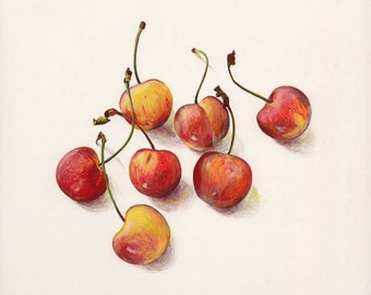 Cherries. Original egg tempera illustration from 'The Taste of America' book.