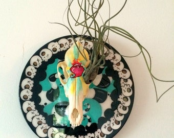 "Skull Air Plant Wall art Surreal Low Brow Coyote Skull Hand Painted on 10"" Wood Circle"