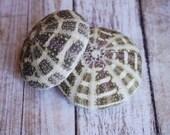 Alfonso Sea Urchins - 1 pc. for Beach Decor, Beach Weddings or Crafts