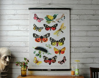 Vintage Butterflies Pull Down Chart Reproduction with Canvas Print and Oak Wood and Brass Hanger