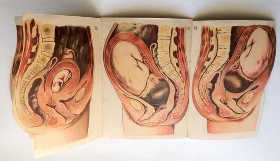 Vecteurs de diagramme, bb, projection, femme, pregnant
