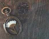 Chrysanthemum Flower Preserved in Clear Casting Resin set in an antique bronze oval frame pendant Necklace.