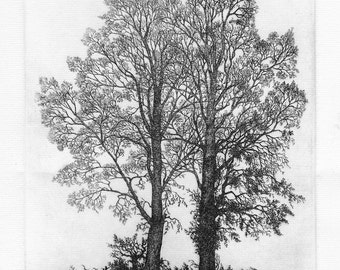 Limited edition etching 'Two Elms' by Tricia Newell