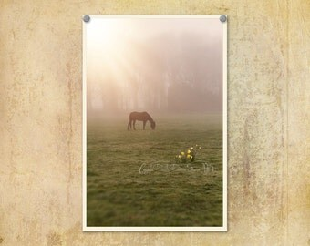 Nature Photography | Horse Photo | Foggy Morning |Ethereal | Country Photo | Rays of Light | Dreamy Photography | Oregon Photo