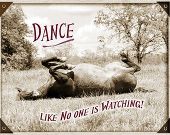 Funny Dance Horse Card 5 card pack