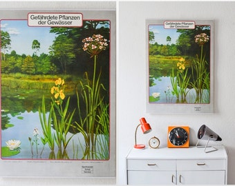 Vintage German educational poster pull down chart lake life nature school map zoological biology