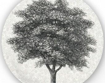 Tree I - vintage engraving melamine plate