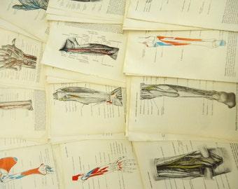 70 Vintage Style Full Page Illustrations Anatomy Science Vintage Paper Pack Book Pages Skulls Bones Ephemera Pack 1980s olivemloudiy