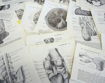 40 Book Pages Black and White Illustrations Anatomy Science Human Retro Vintage Paper Pack Cut Skulls Bones Ephemera Pack 1980s olivemloudiy