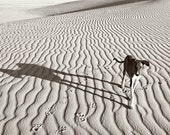 dog photograph, desert photo, black and white, travel photo, shadows and lines, sahara, wall art, minimalist photo