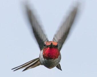 Hummingbird Art Nature Photo Flying Bird Photography Animal Wall Art Print Target Locked