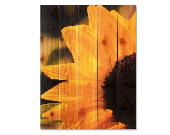 28x36 Yellow Sunflower on Cedar, Inside or Outside Art, Wall Decor, Wall Hanging. (YS2836)