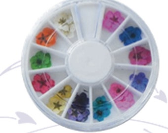 miniature dried flower wheel, with over12 striking color make great inclusions in your art work