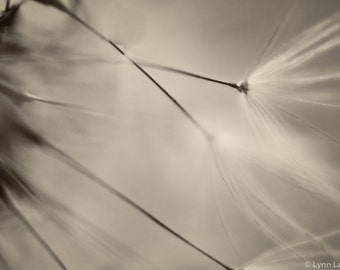 "Dandelion Photography - sepia dandelion wall art 8x10 11x14 nature photography sepia print 16x20 monochrome art 20x30 ""Breathless"""