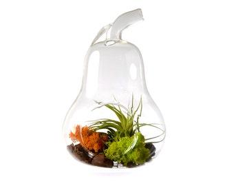 Hinterland Trading Glass Pear Air Plant Terrarium