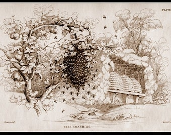 Art Print Bees Swarm Victorian Insect 1800s - Print 8 x 10