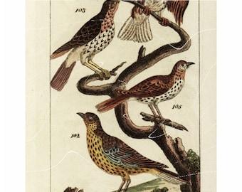 Antique Original Hand colored Engraving  Of Birds  -Mistle Thrush-Fieldfar-Redwing- Song Thrush