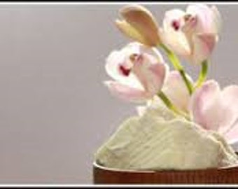 Rice Flower & Shea Premium Fragrance Oil  Available In Several Sizes