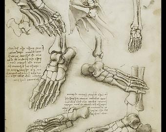 Anatomy - Metatarsal (Human Foot) - anatomical study - vintage image