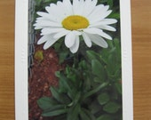 Photo Greeting Cards, White Flower, Daisy, Daisy Photo, Birthday Cards, Get Well Cards, Miss You Cards, Photo Note Cards, Thank You Cards