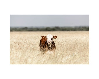 Young Hereford Fine Art Photography Farm and Ranch House Chic Home Decor Country Style Texas Cattle Grassy field cow calf simple large art