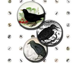 Crows Blackbird Ravens Halloween Poe Black Bird Digital Images Collage Sheet 10 mm Circles 8.5x11 & 4x6 INSTANT Download TC09