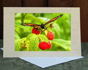 A Resting Butterfly Greeting Card, RGTPhotos, Wall Art Photography, RGTPhotos, Red Raspberries, Green Red Orange, Note cards