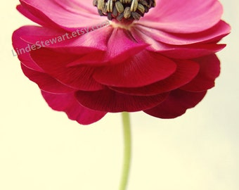 Red Flower Photograph, floral wall art, bedroom decor