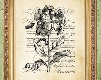Vintage Flowers Art Prints Wall Decor or Vintage Dictionary Print Dictionary Prints Book Page Art