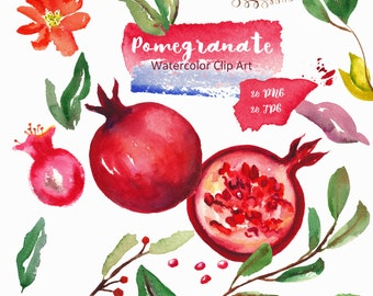 Watercolor clipart, red fruits. Digital clipart hand drawn. SET Pomegranate. Romantic wedding, tender red  yellow rose, flowers logo
