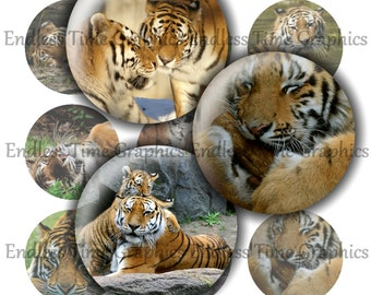Tiger Bottle Cap Images. 1 Inch Printable Circles- 4x6 Digital Collage Sheet. Pendant Necklace, Key Chains, Badge Reel. 145