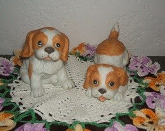 Playful Pair of Two Adorable Brown and White Puppies