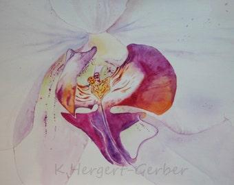 Orchid phalaenopsis, watercolor original watercolor original 24 x 34 cm