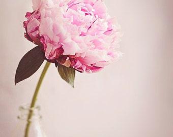 Peony Fine Art Photograph, Romantic, Floral Shabby Chic, Soft Pinks, Home Decor, Cottage Decor