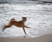 Wave hunting on the Baltic Sea - dog on the beach in Koserow, Germany, 2013, Fine Art Print, color, signed with embossing