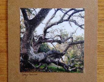 Majestic Oak Tree Card