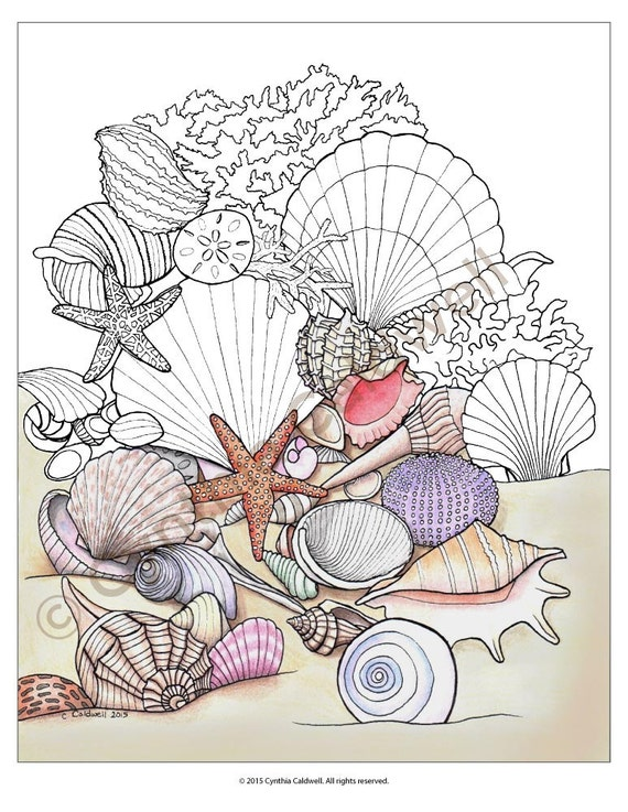 Seashells coloring page instant download for Coloring pages of seashells