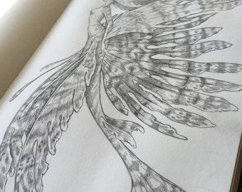 Lion Fish Mermaid by Renae Taylor (original drawing)