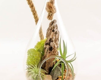 Teardrop Air Plant Terrarium Kit by Midnight Blossom - Hanging or Tabletop - Awesome DIY Tillandsia Terrarium
