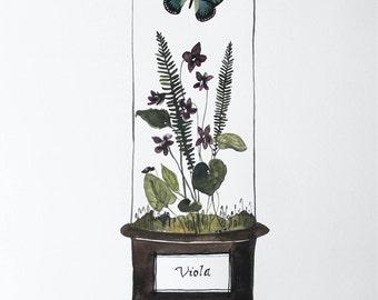 Viola Vivarium 11x14 Archival Watercolor Print