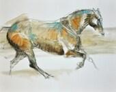 Canter Horse, Animal, Con...