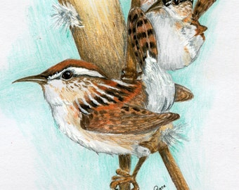 Wrens and Cat-tail 8 x 10 giclee print